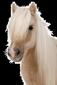osteopathie-equine-1