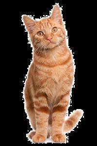 osteopathie-feline-1