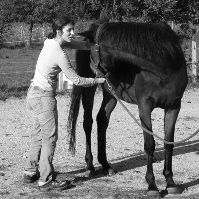 veterinaire osteopathe equin
