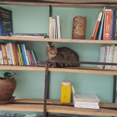 Un chat qui prend ses aises en salle de consultation